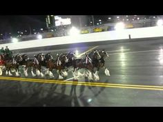Budweiser Clydesdale Horses On The Track Of The Daytona International Speedway Before The 2011 Budweiser Shootout Race Pretty Horses, Beautiful Horses, Animals Beautiful, Cute Animals, Horses And Dogs, Clysdale Horses, Clydesdale Horses Budweiser, Budweiser Commercial, High Horse