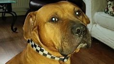 """David Cameron MP: Save Spud 