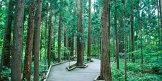 Maruyama Park | Summer | Welcome to Sapporo