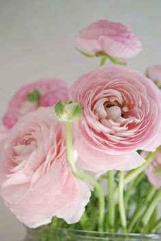 Simple Beauty Ranunculus – Start A Easy Spring Backyard Flower Garden Project My Flower, Fresh Flowers, Pink Flowers, Beautiful Flowers, Pink Peonies, Colorful Roses, Simply Beautiful, Ranunculus Flowers, Peony
