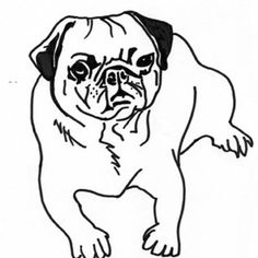 pug drawing outline pug coloring pages free printable for kids pug coloring pages - Pug Pictures To Color