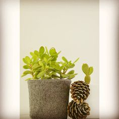 Pot cosy-When knitting meets cacti pots 🌵 Knitted pot cozy for my in-door plant • love my cacti collection🌿 #potcozy #knittersgonnaknit #cactilove #sweethome🏡 #indoorplants #knittedpot #knittedcozypot #jesterbethknits...