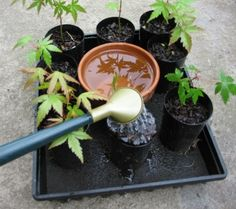 """Self Watering Tray- Terracotta pot with drain hole sealed, """"capillary matting"""" and seedlings in pots. Hydroponic Gardening, Container Gardening, Gardening Tips, Urban Gardening, Urban Farming, Indoor Gardening, Self Watering Plants, Self Watering Containers, Water Tray"""