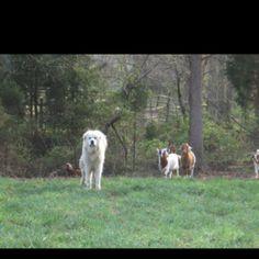 Max the livestock protector