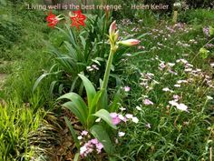 Living well quote by Helen Keller