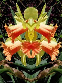 clown des cloches de pâques innommés fleur flower nature plante jonquille botanique créature étrange masque composition portrait fantastique surnaturel personnage imaginaire jardin apparition mystérieux monstre caricature humour