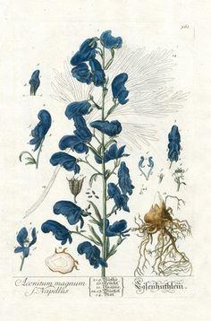 Ботаническая иллюстрация   2 882 фотографии