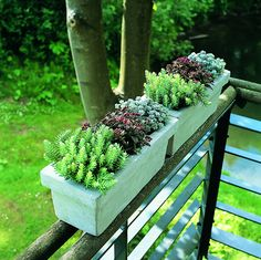 Floradania Marketing: Växter