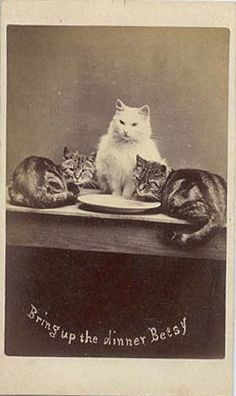 "The Original LOL cats. ""During the 1870s, Harry Pointer became well known for a series of photographs of his pet cats. By 1872, Harry Pointer had created over one hundred different captioned images of cats. The Photographic News reported that, by 1884, Pointer had published about two hundred pictures in The Brighton Cats series."""