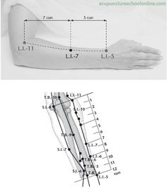 L.I.-7 Warm Flow WENLIU - Acupuncture Points -1