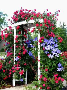 Arbor covered with climbing roses and clematis