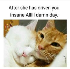 ✔️💯👉🏻👍🏾 Good Memes to post on your page! Funny Animal Memes, Cute Funny Animals, Funny Relatable Memes, Funny Dogs, Cuddle Pictures, Funny Pictures, Cuddle Quotes, Romantic Memes, Best Memes Ever