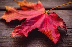 Autumn - Welcome to the autumn! By Natasha Busel