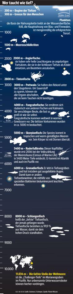 Unter dem Meer: Infografik zur Tiefsee