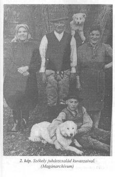Kuvasz in hungarian Family