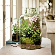Terrariums What is a terrarium? The best definition for a terrarium is a mini indoor garden kept in a glass container. Terrarium's are perfect for those who have little time for gardening or just. Decor Terrarium, Terrarium Cactus, Mini Terrarium, How To Make Terrariums, Making A Terrarium, Glass Terrarium Ideas, Bottle Terrarium, Moth Orchid, Orchid Plants