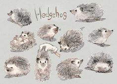 Drawn hedgehog adorable - pin to your gallery. Explore what was found for the drawn hedgehog adorable Hedgehog Art, Hedgehog Tattoo, Hedgehog Drawing, Cute Hedgehog, Cartoon Drawings, Animal Drawings, Hedgehog Accessories, Hedgehog Illustration, Cute Animal Pictures