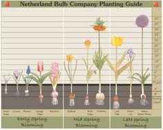 Tips for Planting Fall Bulbs - Traditional Home