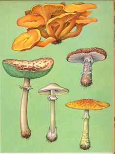 Mushrooms, from The Golden Treasury of Natural History, by Bertha Morris Parker, copyright 1952