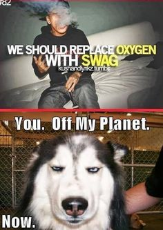"Yeah I think all that bullshit you call ""swag"" has cut off the oxygen to ur brain, so I think you wouldn't need it any way c; bye."