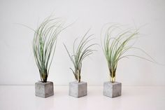 Air Plant Holder : CONCRETE & BRASS, 1 Piece, Tillandsia, Raw Industrial