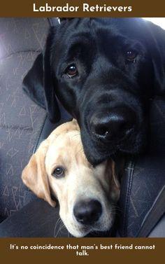 160 Ideas De Perros Negros Perros Negros Perros Mascotas