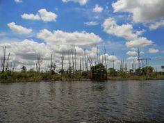 Sawgrass Recreation Park  Florida 2011