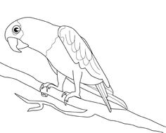 Colour Drawing Free Wallpaper: Parrot Coloring Drawing Free wallpaper