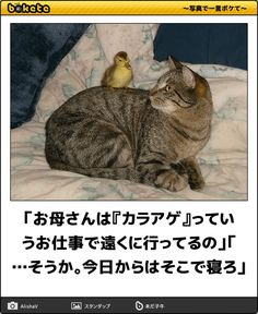"""Intrepid Duckling Bravely Climbs Indifferent Cat Exhibiting behavior that many onlookers called """"foolhardy"""" and """"reckless,"""" one daring young duckling – named """"Duckie,"""" according to sources – climbed. Unlikely Friends, Baby Ducks, Zebras, I Love Cats, My Images, Animals And Pets, Make Me Smile, Funny Cats, Cat Lovers"""