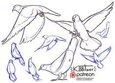 Figure Drawing Tutorial kibbitzer is creating Reference sheets, tutorials and Figure Drawing Tutorial, Male Figure Drawing, Sketches Tutorial, Figure Drawing Reference, Drawing Base, Art Reference Poses, Anatomy Reference, Animal Sketches, Animal Drawings
