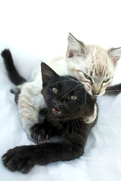 It's a Cat-Eat-Cat world!