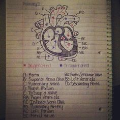 The heart,  #respiratory #rt #rcp