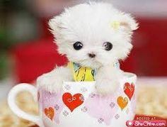 Image result for cute animals pictures