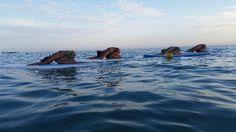 Il Viaggiatore Magazine - Vivosa Apulia Resort - Rilassamento sulle tavole da Surf - Marina di Ugento, Lecce