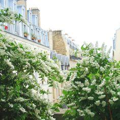 view from the promenade plantée, paris.