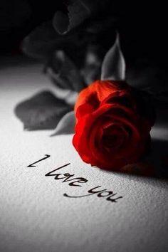 Avui les roses son més que llum i color, són passió, esperança i amor. Feliç Sant Jordi 🌹❤⠀⠀⠀⠀⠀⠀⠀⠀⠀⠀⠀⠀⠀⠀⠀⠀⠀⠀⠀⠀⠀⠀⠀⠀⠀⠀⠀⠀Hoy las rosas son mas que luz y color, son pasión, esperanza y amor. Eckhart Tolle Meditation, You Are My Moon, Romantic Table Setting, Romance And Love, True Romance, Love Rose, Love Wallpaper, Mobile Wallpaper, Heart Wallpaper