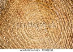 Find Log Timber Cross Section Pattern Grains stock images in HD and millions of other royalty-free stock photos, illustrations and vectors in the Shutterstock collection. Thousands of new, high-quality pictures added every day. Cross Section, Logs, Straw Bag, Photo Editing, Grains, Royalty Free Stock Photos, Pattern, Pictures, Image