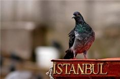The passengers have spent a busy day in Istanbul, sightseeing and buying souvenirs. A few have heard about the Count's arrest, but most are unaware of the intrigue that went on around them.  Everyone is looking forward to Venice as they prepare for the evening ahead.
