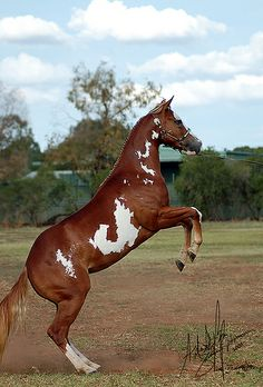 Paint Horse Nationals 2009 | Flickr - Photo Sharing!
