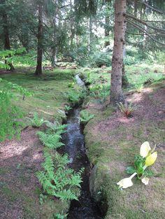 The Bloedel Reserve - traditional - landscape - seattle - Debra Prinzing