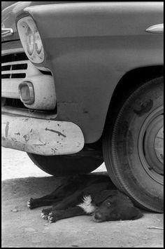 Elliott Erwitt. New Mexico 1962