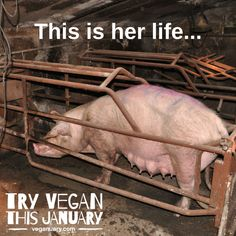 Please Don't finance animal cruelty. Know the truth. Please help me save the Animals