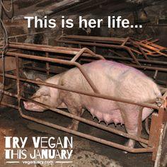 why finance animal cruelty #vegan