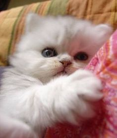 What a little cutie ! and like OMG! get some yourself some pawtastic adorable cat apparel!