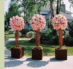 Rose Topiaries
