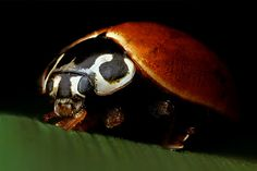 Lady Bug by J.R.Photography