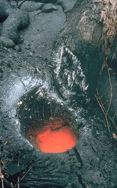 Tree trunks engulfed and incinerated by lava leave cylindrical hollows, or tree molds, where lava solidified against them; tree molds often preserve the original surface texture of the tree. Tree molds are found within standing lava trees and on the surfaces of lava flows.