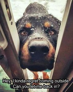 If you've got a short-haired dog, they feel the cold just like you do! Don't forget to let them back inside! #dogs #doglovers