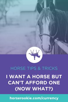 You love horses, but you may not be able to afford your own. Good news: there are ways to get your horse fix even if you can't buy one of your own. Horse Training Tips, Horse Tips, My Horse, Horse Love, Horse Riding, Horses, Horse Behavior, Lifestyle Quotes, Now What