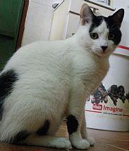 Gato Josete. Añora la cercanía de la gente y es especialmente mimoso. Animals, Kittens For Adoption, Foot Prints, Gatos, Animales, Animaux, Animal, Animais